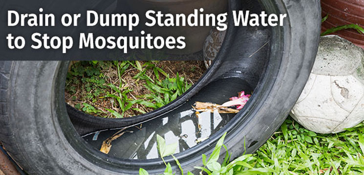Drain or dump standing water to stop mosquitoes.
