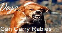 Dogs can carry rabies