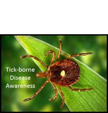 picture of a tick on a green leaf